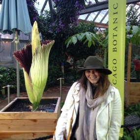 The first visitor to Sprout the titan arum on the morning after the bloom opened.