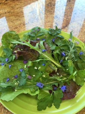 PHOTO: Today's blue plate special: flavorful greens finished with blue flower petals.