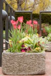 PHOTO: Heritage Garden trough with spring tulips.