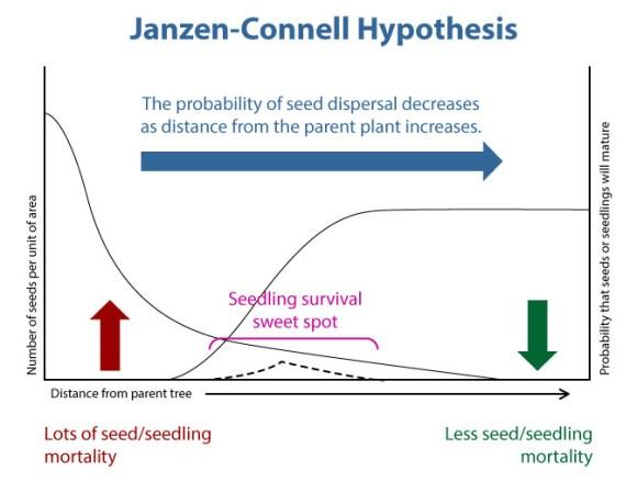 DIAGRAM: Janzen-Connell hypothesis.