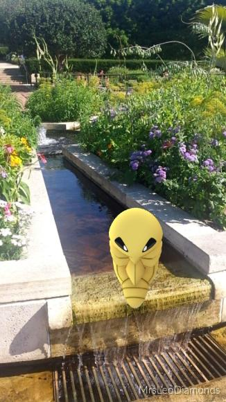 PHOTO: Kukuna Pokémon in the Heritage Garden.