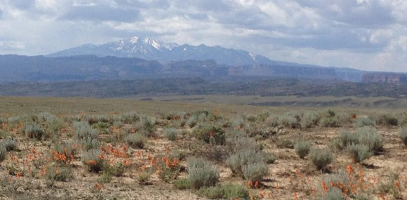 PHOTO: La Sal mountains in the background; the plains abloom in May.