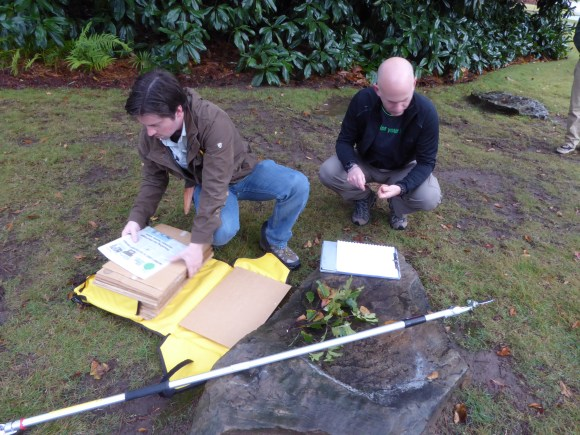 PHOTO: Matt Lobdell at the Morton Arboretum and Greg Paige at Bartlett Tree Research Laboratory and Arboretum make an herbarium voucher of Quercus boyntonii.