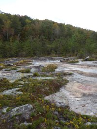 PHOTO: Moss Rock Preserve at the habitat of Quercus georgiana