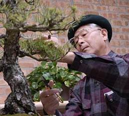 PHOTO: Susumu Nakamura trains a bonsai.
