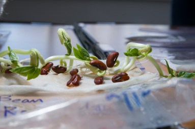 PHOTO: Bean sprouts.