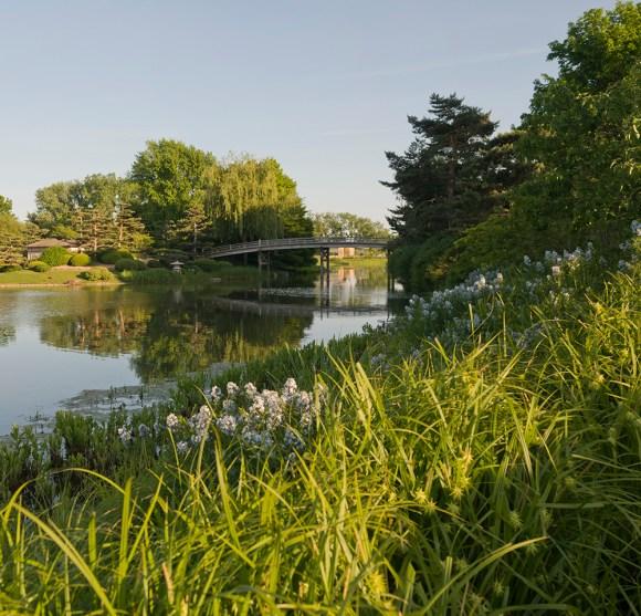 PHOTO: Native plants and grasses surround the restored shoreline.