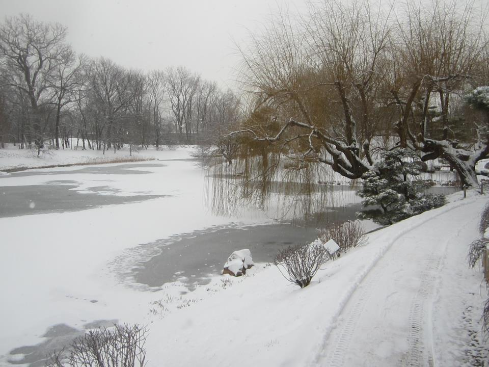 http://i0.wp.com/my.chicagobotanic.org/wp-content/uploads/Snow-Covered-Japanese.jpg