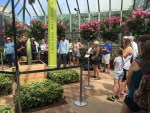 PHOTO: Outdoor floriculturist Tim Pollak talks titan arum with Garden visitors.