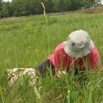 Emily Yates examining prairie