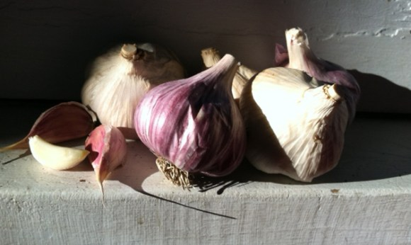 PHOTO: Garlic bulbs in storage on a shelf (with artful lighting).