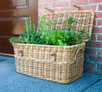 PHOTO: herb garden in an old picnic basket.