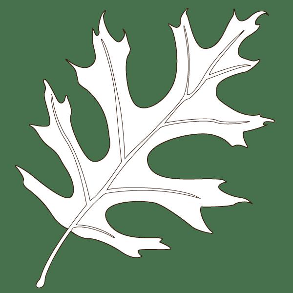 pin oak leaf illustration