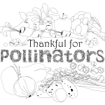 Thankful for pollinators