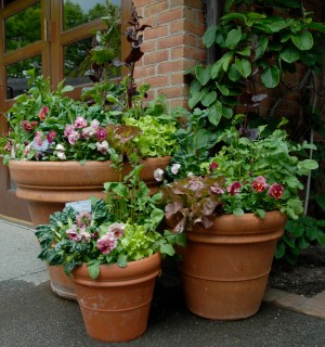 PHOTO: Three container plantings of varying heights.