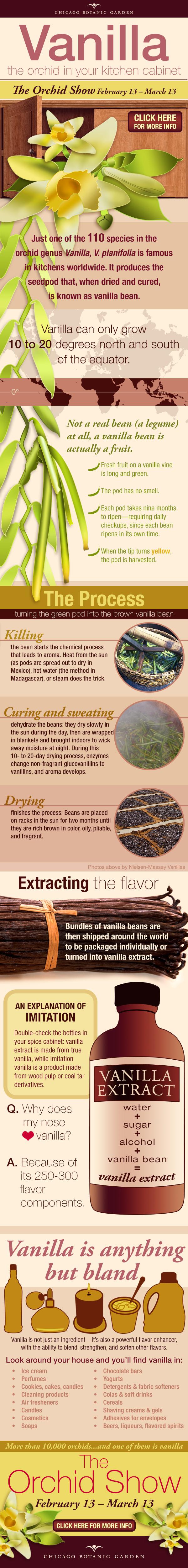 ILLUSTRATION: Vanilla infographic.