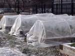 winter_coldframes