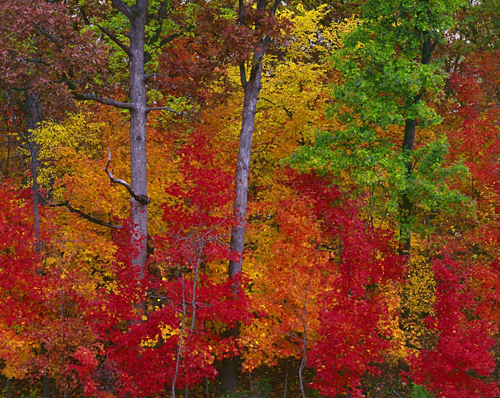 Fall Scripture Wallpaper Ozark Autumn Landscapes Leaves Lichen Nature Photo Graphics