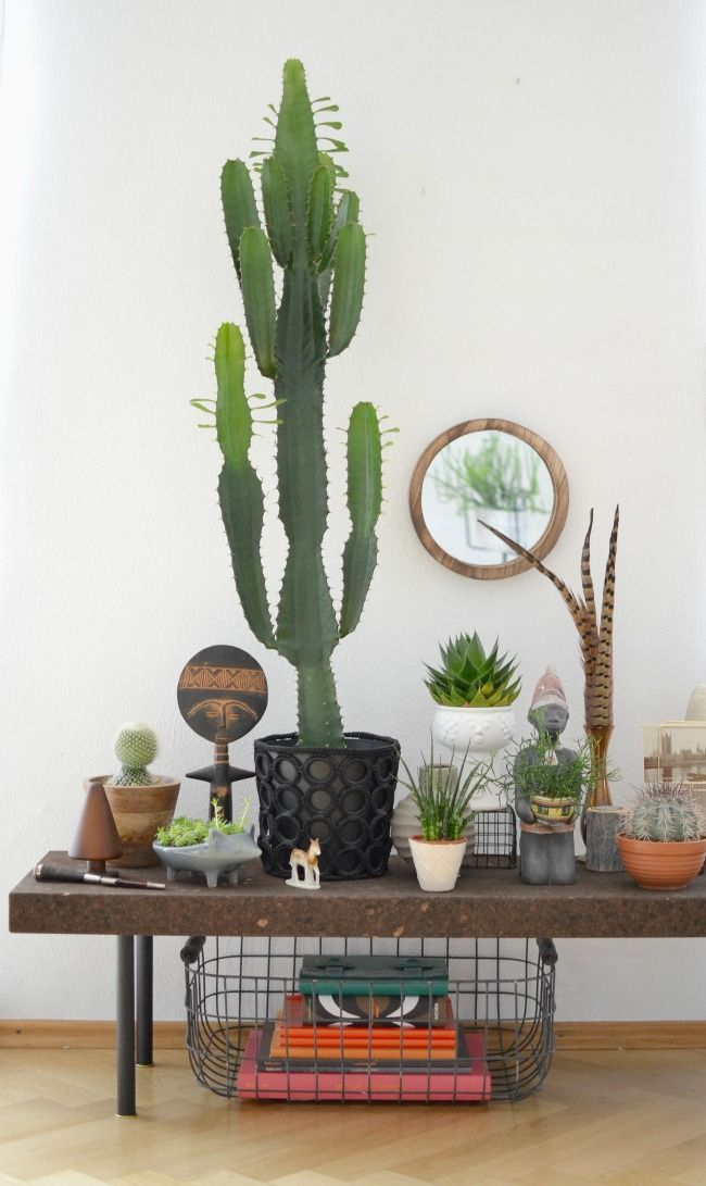 Indoor Garden Indoor Cactus Garden Ideas To Display Your Collection In A
