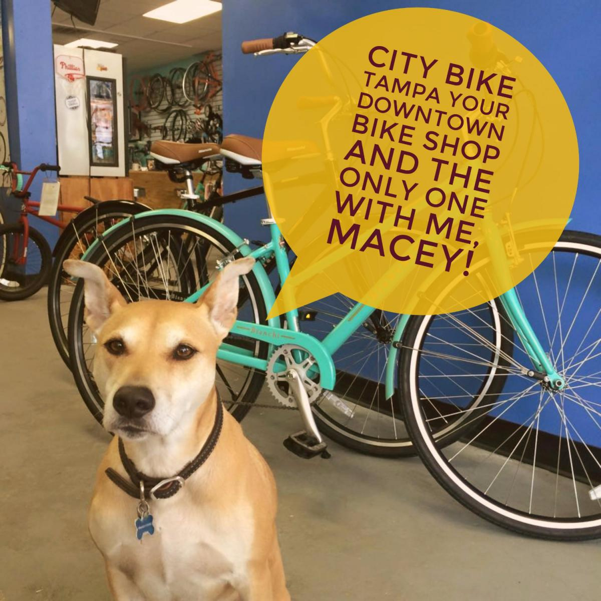 Bike Shop Tampa Fl 813 Spotlight City Bike Tampa Your Downtown Bike Shop