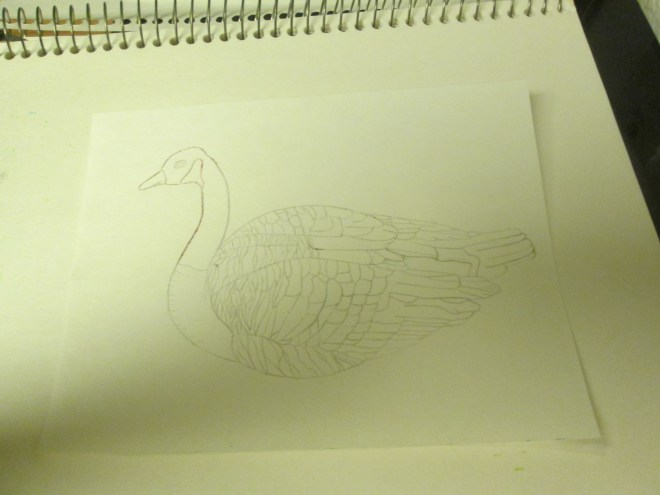 The drawing of the Canadian goose on the final paper. Now  it is time to color my illustration in.