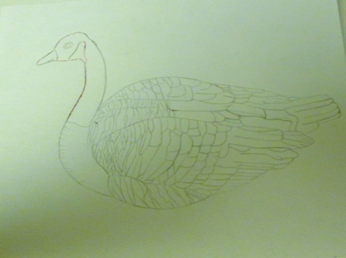 Drawing A Canadian Goose
