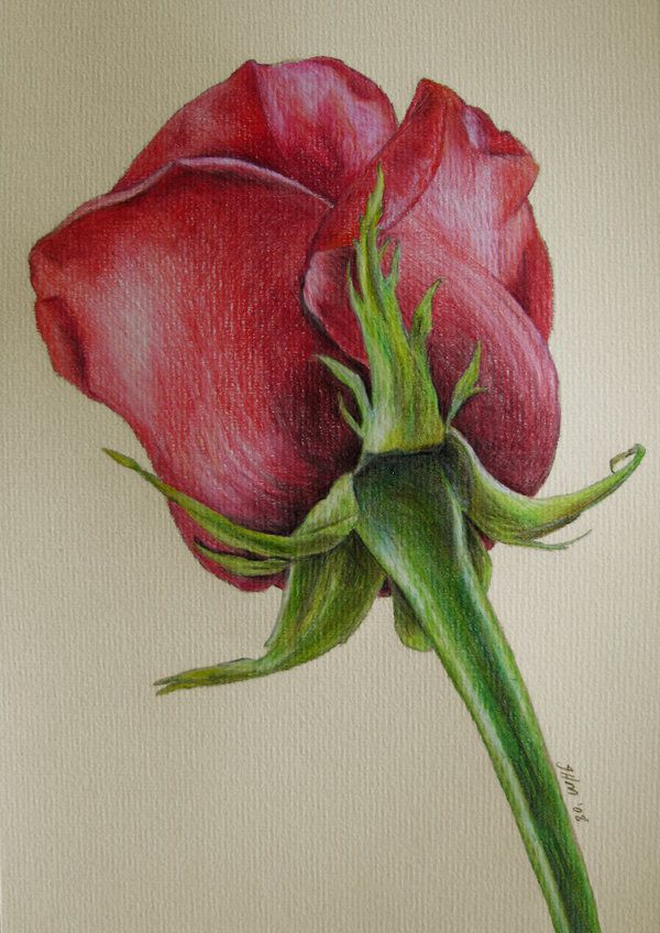 25 Beautiful and Stunning Flower Drawings from around the world