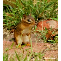 Small Crop Of How To Kill Chipmunks