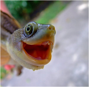 """""""Happy Turtle"""" by Human_Opium at deviantART.com"""