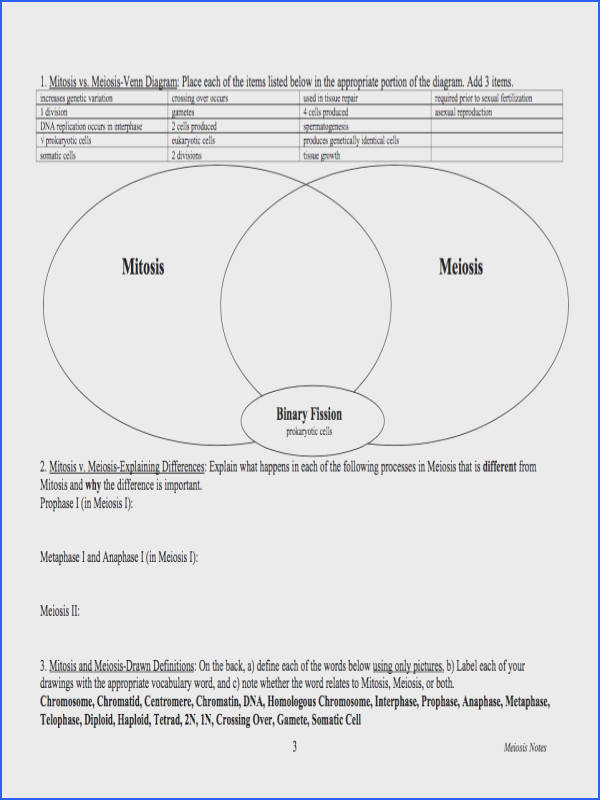 Mitosis and Meiosis Worksheet Mychaume
