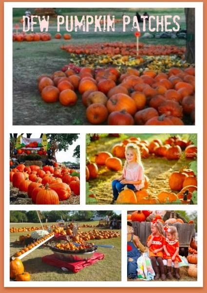 DFW Pumpkin Patches