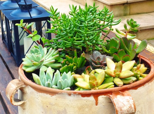 Replanting A Succulent