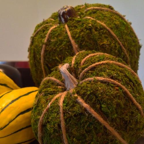 Upper Side Detail Moss Pumpkin - mydearirene