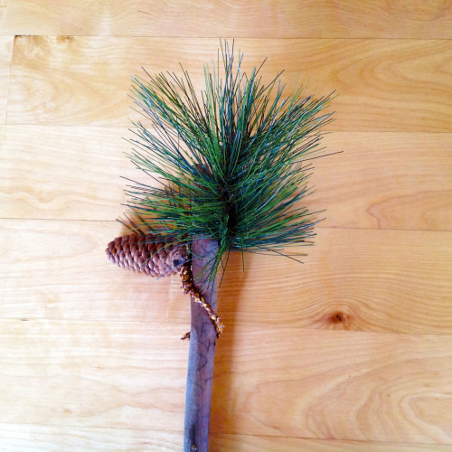 Long Needle Pine - mydearirene