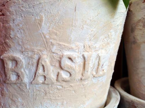 Basil - mydearirene