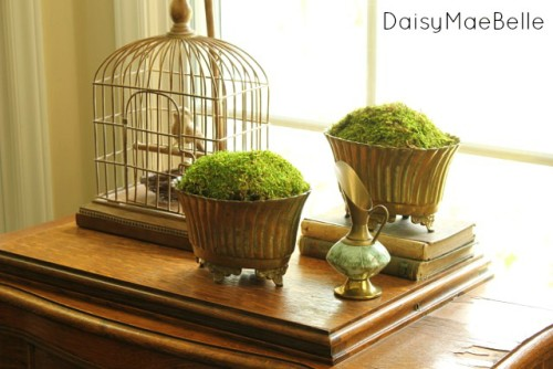 moss-in-brass-containers6