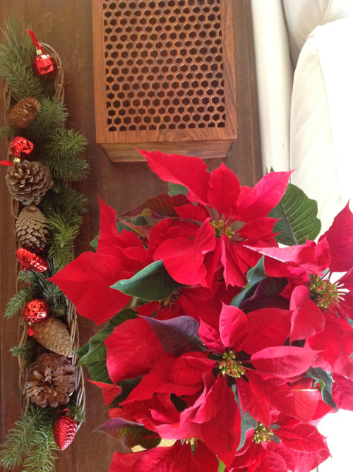 Red Poinsettia - mydearirene.com