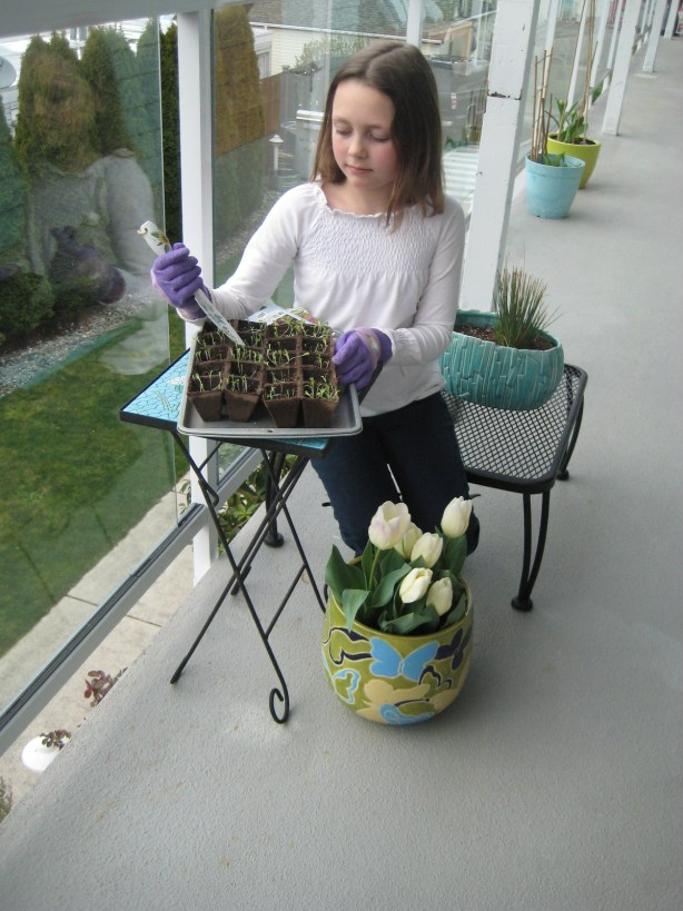 Maddie Stackhouse checks over the lettuce seedlings to be used in the Kids Gardening Workshop.