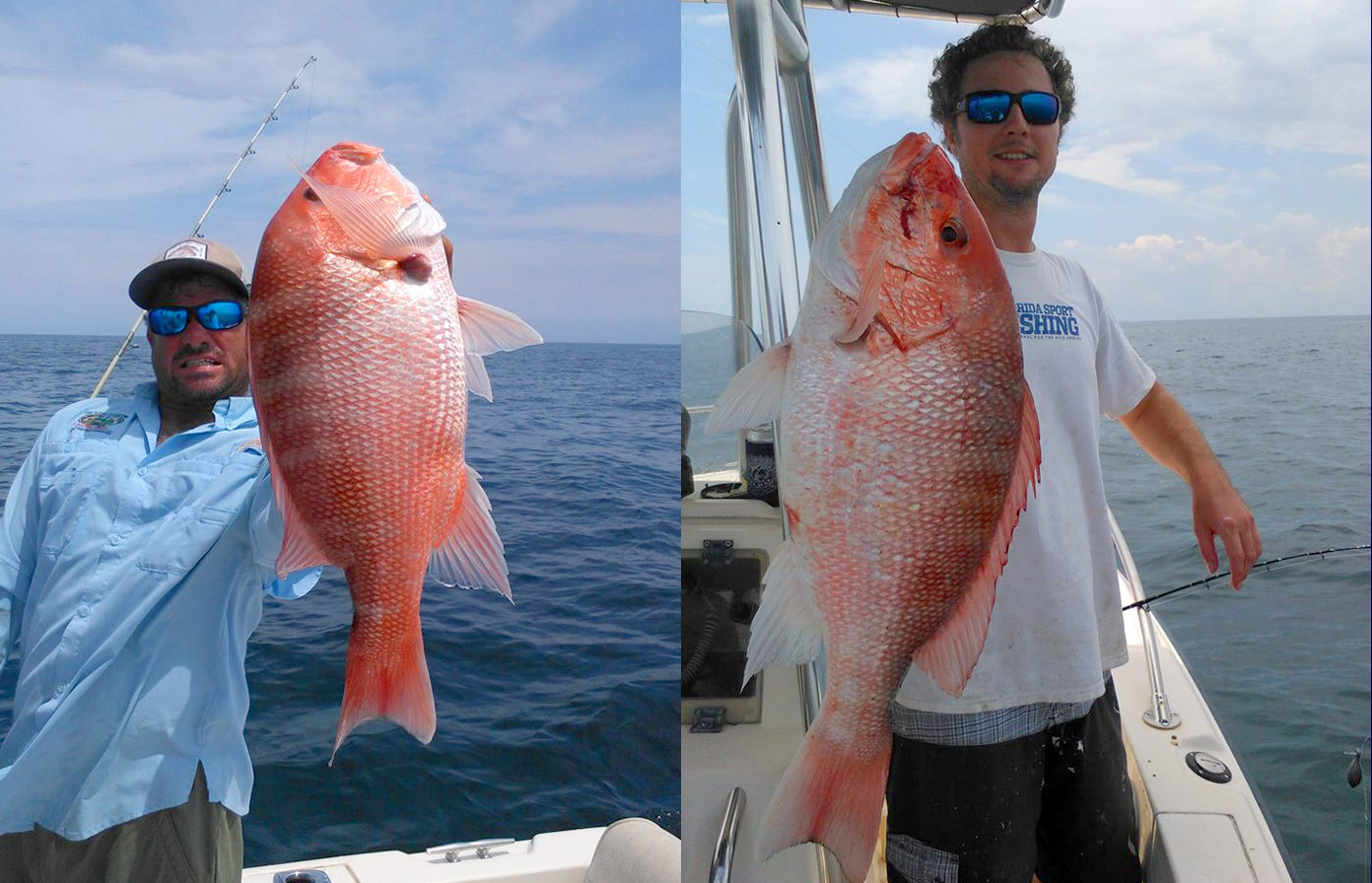 Drewredsnapper for Majesty deep sea fishing
