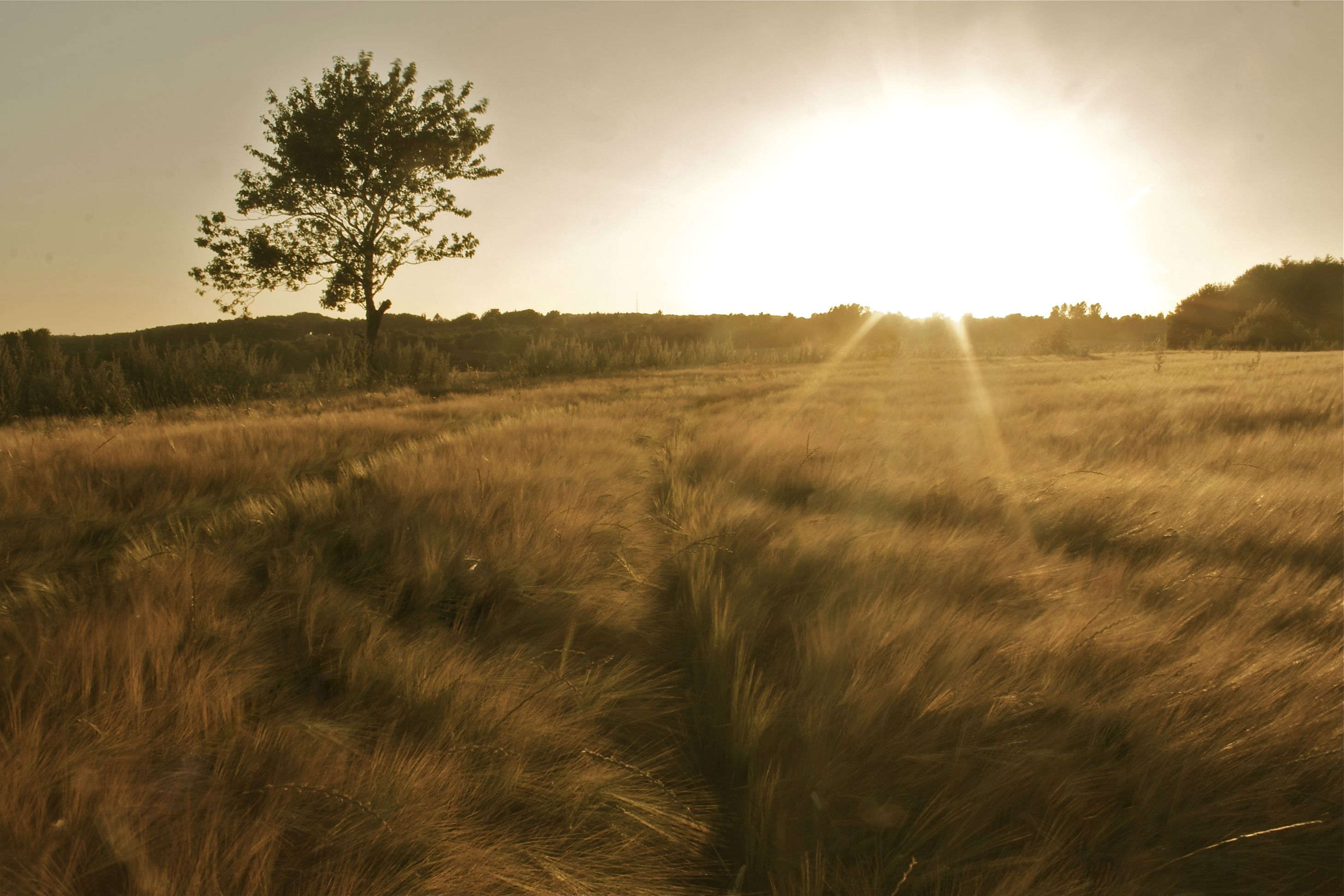 Suga Quotes Wallpaper Beautiful Grass Plains Of Denmark