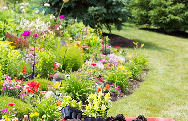 Lawn Care My Garden Expert - Plants, Lawn Care, Design - sample lawn and garden