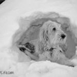 Cave Dog | GBGV | Black and White Sunday