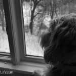 Critter Watching   GBGV   Black and White Sunday