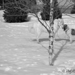 Deer? Dogs? | GBGV | Black and White Sunday
