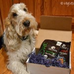 Dangerously Tasty Healthy Snacks | GBGV | #WellPet