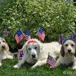 Furry Fourth of July Wishes!