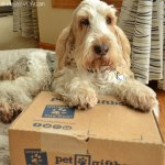 The Gift Of Fun In A Box