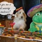 Cinco de Mayo With Señor Frog