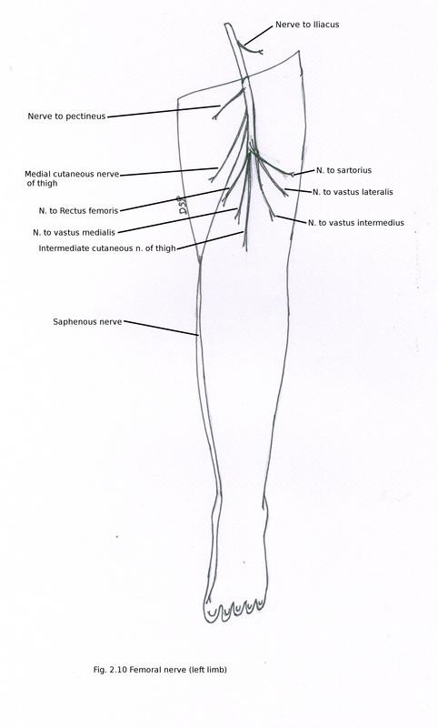 side foot pain diagram