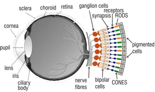 Rods Eye Diagram Wiring Diagram